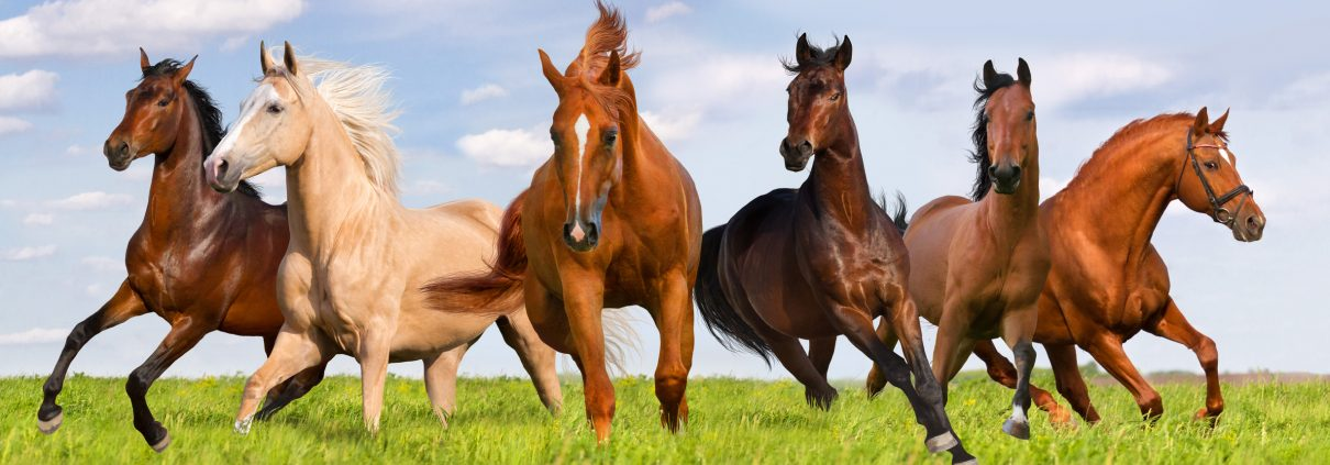 Equine Management and Training (AAS)